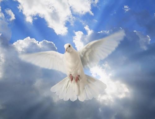 ¿Cómo actuar ante los Carismas del Espíritu Santo?